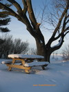 Picnic_table_elm_2